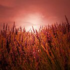 THE LAVENDER FIELD by leonie7
