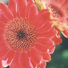 Large Red and Yellow Flowers by photolover08