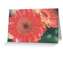 Large Red and Yellow Flowers Greeting Card