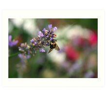 Bokeh Bee Art Print