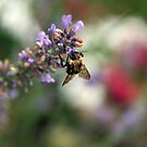 Bokeh Bee by M.C. O'Connor