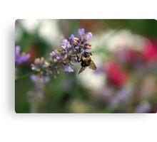 Bokeh Bee Canvas Print