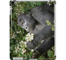 mountain gorilla eating flowers, Uganda iPad Case/Skin
