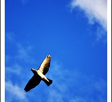 Soar by Suzanne Edge