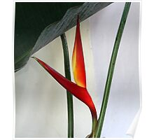 Exotic Plant Poster