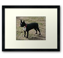 zoe in our yard Framed Print