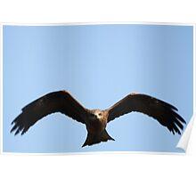 Black Kite Poster