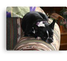 comfy zoe Canvas Print