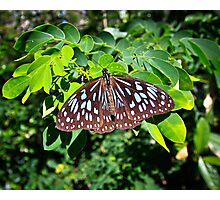 Butterfly capture Photographic Print