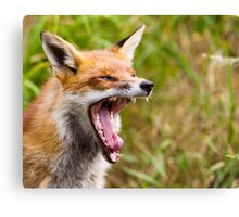 Red Fox Yawn Canvas Print