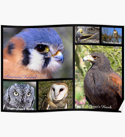 Birds Of Prey Poster Poster