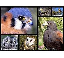 Birds Of Prey Poster Photographic Print