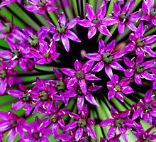 Allium (Macro) by Larry Trupp