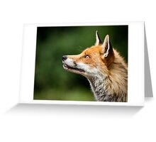 What Do Foxes Dream Of? Greeting Card