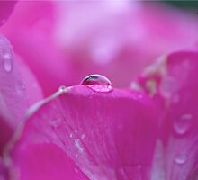 Droplet on petal by Yannik Hay