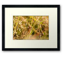 Sunshine Dragon Framed Print