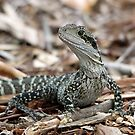 Eastern Water Dragon by EnviroKey