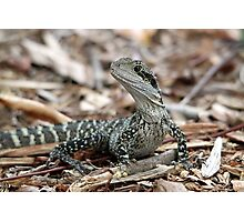 Eastern Water Dragon Photographic Print