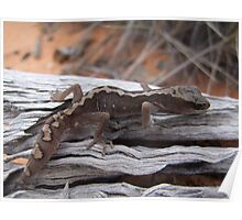 Eastern Stone Gecko Poster