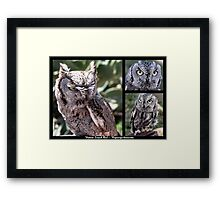 Western Screech Owl ~ Raptor Series Framed Print