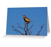 Melodious Lark Greeting Card