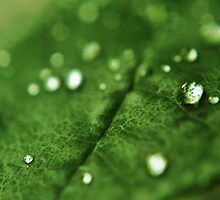 Raindrop Bokeh by Amber Williams