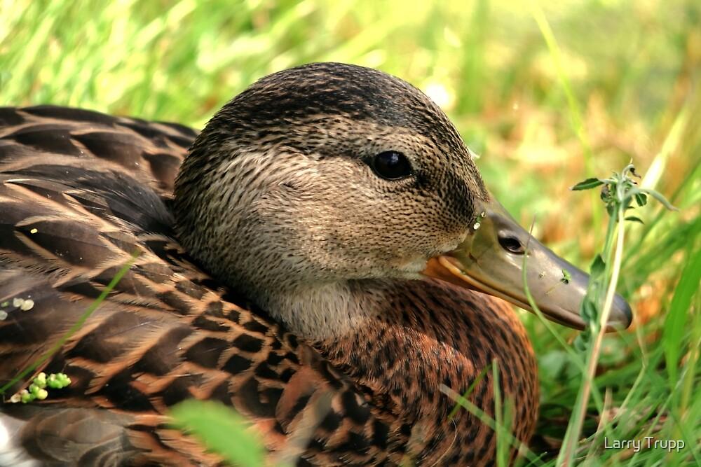 Shhh...She's on the Nest by Larry Trupp