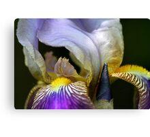 Deep Purple Iris Canvas Print
