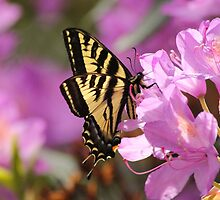 Butterfly on a Pink Flower by THurdCreations