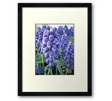 Blue Bells Framed Print