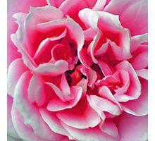 Rose - Pink Photographic Print