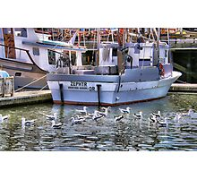 Gulls In the Water Photographic Print