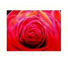 red beauty - close up using macro Art Print