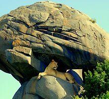 Her Majesty , Queen of Serengeti by Richard Shakenovsky