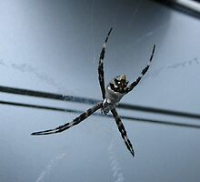 Spider #1 by wutang4life36