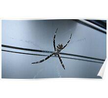 Spider #1 Poster
