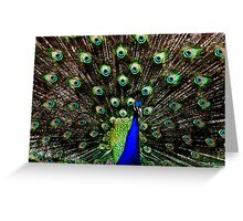 Peacock, USA Greeting Card