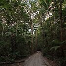 Rainforest on the World's Largest Sand Island by Janette Rodgers