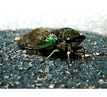 Mean Buggy Photographic Print