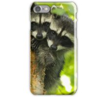 Raccoon Cubs in a Tree iPhone Case/Skin