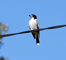 Bird on a Wire by Sharon Robertson