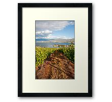 A view from the vineyard Framed Print