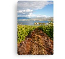 A view from the vineyard Canvas Print