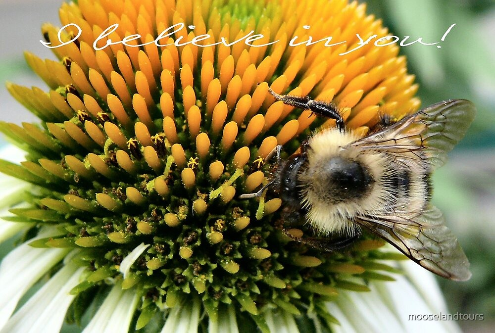Bumble Bee And Blossom by mooselandtours