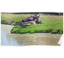 By The Water Hole Poster