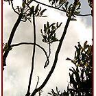 HSV Tree (Abbrevistan) by okmondo