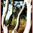 Boogie Woogie Trees (Louisiana) by okmondo