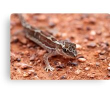 Box-patterned Gecko Canvas Print