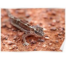 Box-patterned Gecko Poster