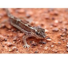 Box-patterned Gecko Photographic Print